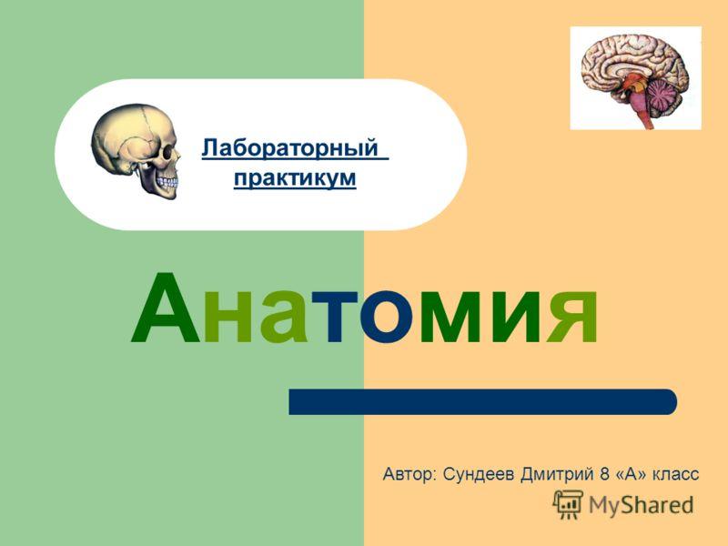 Анатомия Лабораторный практикум Автор: Сундеев Дмитрий 8 «А» класс