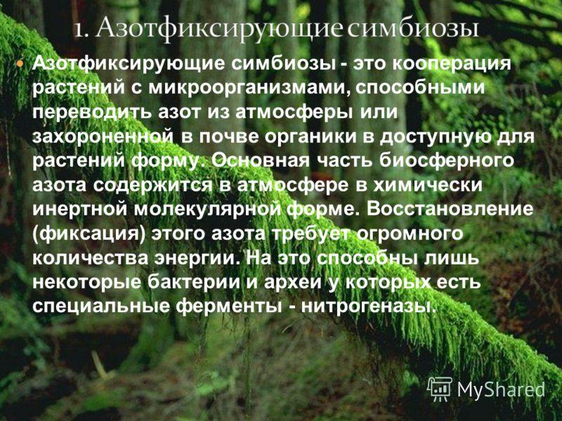 Азотфиксирующие симбиозы - это кооперация растений с микроорганизмами, способными переводить азот из атмосферы или захороненной в почве органики в доступную для растений форму. Основная часть биосферного азота содержится в атмосфере в химически инерт
