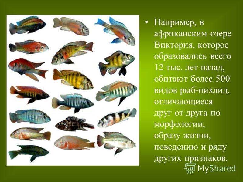 Например, в африканским озере Виктория, которое образовались всего 12 тыс. лет назад, обитают более 500 видов рыб-цихлид, отличающиеся друг от друга по морфологии, образу жизни, поведению и ряду других признаков.