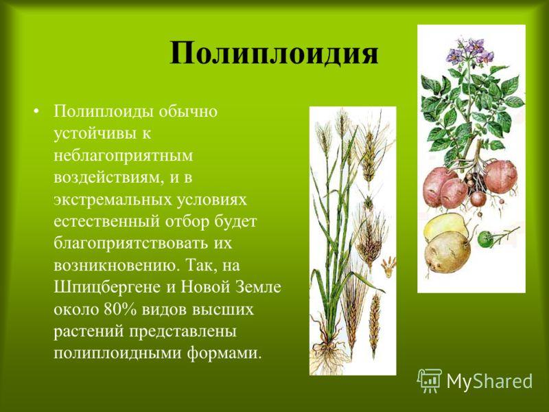 Полиплоидия Полиплоиды обычно устойчивы к неблагоприятным воздействиям, и в экстремальных условиях естественный отбор будет благоприятствовать их возникновению. Так, на Шпицбергене и Новой Земле около 80% видов высших растений представлены полиплоидн