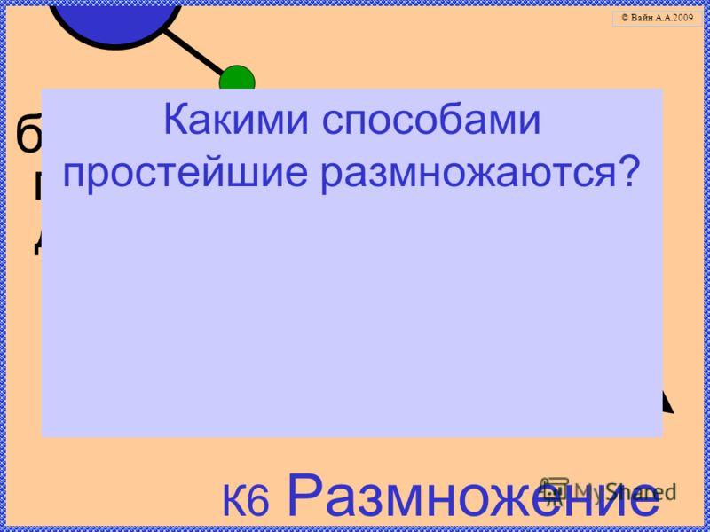 К6 Размножение бесполое: простое деление половое (у некоторых) Какими способами простейшие размножаются? © Вайн А.А.2009