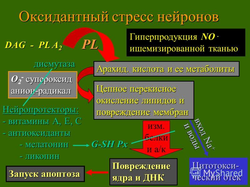 Оксидантный стресс нейронов О супероксид О 2 - супероксиданион-радикал Цепное перекисное окисление липидов и повреждение мембран дисмутаза Нейропротекторы: - витамины А, Е, С - антиоксиданты - мелатонин G-SH Px - мелатонин G-SH Px - ликопин - ликопин