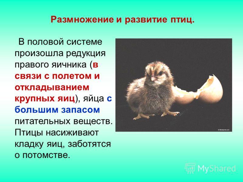 Размножение и развитие птиц в половой