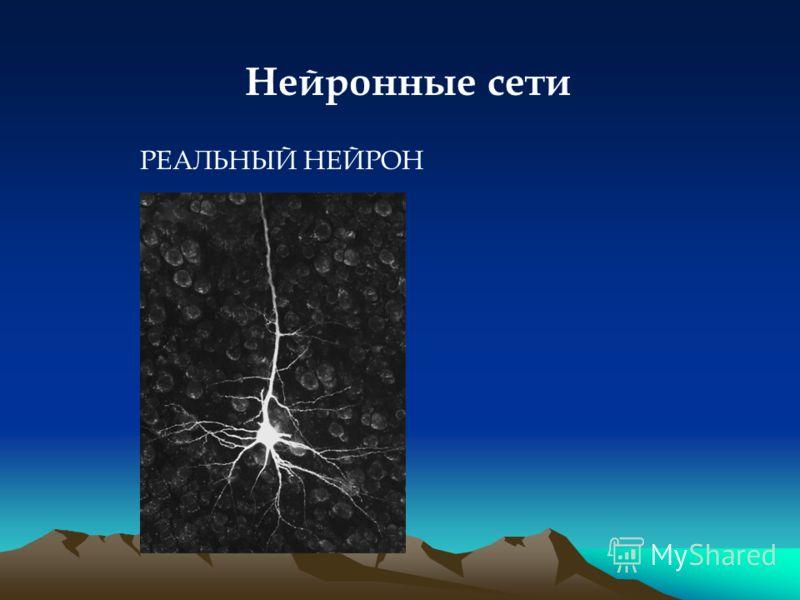 Нейронные сети РЕАЛЬНЫЙ НЕЙРОН