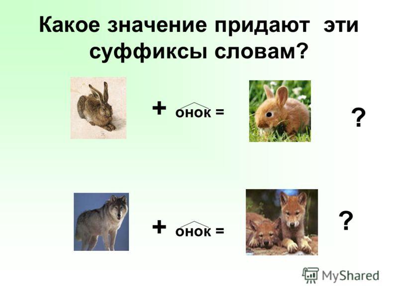Какое значение придают эти суффиксы словам? + онок = ? ?
