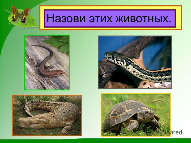 Название группы Количество ног Покровы Земноводные 4 голая кожа Земноводные.