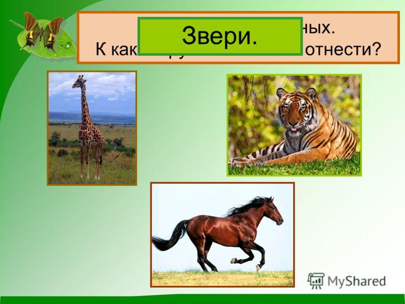 Животных можно группировать по числу ног и по покрову тела. Название группы Количество ног Покровы ………… ………… ………… Какие группы животных вы уже знаете?