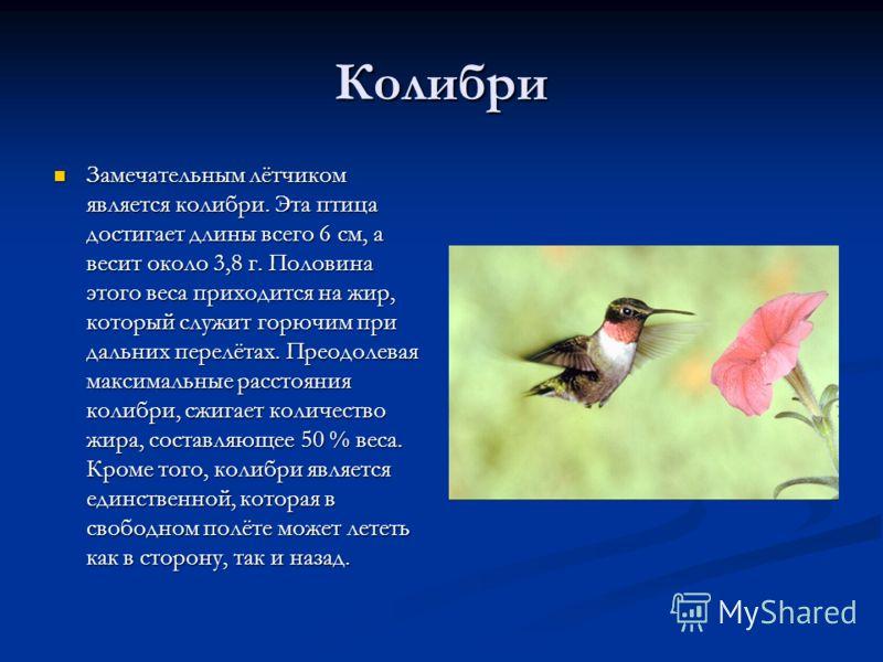 Колибри Замечательным лётчиком является колибри. Эта птица достигает длины всего 6 см, а весит около 3,8 г. Половина этого веса приходится на жир, кот