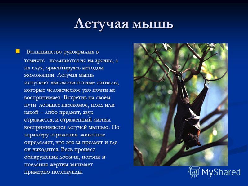 Летучая мышь Большинство рукокрылых в темноте полагаются не на зрение, а на слух, ориентируясь методом эхолокации. Летучая мышь испускает высокочастотные сигналы, которые человеческое ухо почти не воспринимает. Встретив на своём пути летящее насекомо
