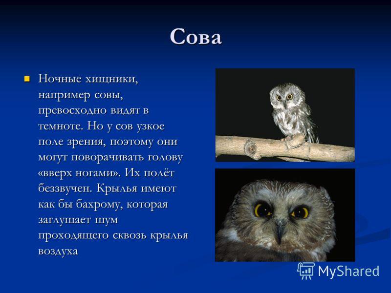 Сова Ночные хищники, например совы, превосходно видят в темноте. Но у сов узкое поле зрения, поэтому они могут поворачивать голову «вверх ногами». Их