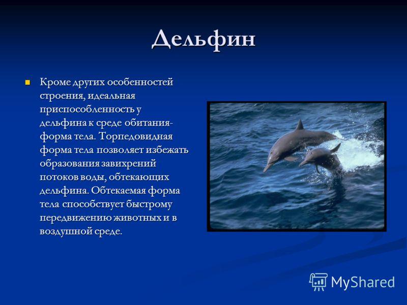 Дельфин Кроме других особенностей строения, идеальная приспособленность у дельфина к среде обитания- форма тела. Торпедовидная форма тела позволяет избежать образования завихрений потоков воды, обтекающих дельфина. Обтекаемая форма тела способствует