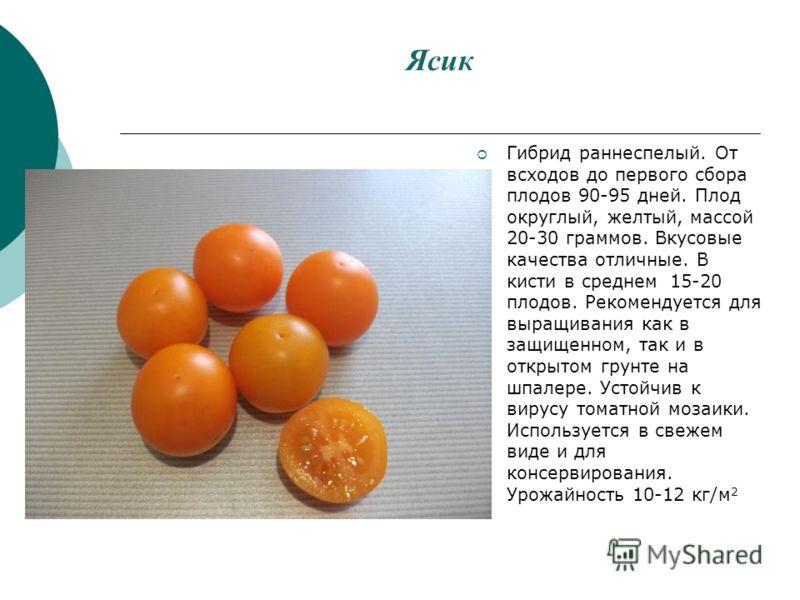Ясик Гибрид раннеспелый. От всходов до первого сбора плодов 90-95 дней. Плод округлый, желтый, массой 20-30 граммов. Вкусовые качества отличные. В кисти в среднем 15-20 плодов. Рекомендуется для выращивания как в защищенном, так и в открытом грунте н