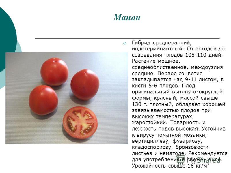 Манон Гибрид среднеранний, индетерминантный. От всходов до созревания плодов 105-110 дней. Растение мощное, среднеоблиственное, междоузлия средние. Первое соцветие закладывается над 9-11 листом, в кисти 5-6 плодов. Плод оригинальный вытянуто-округлой