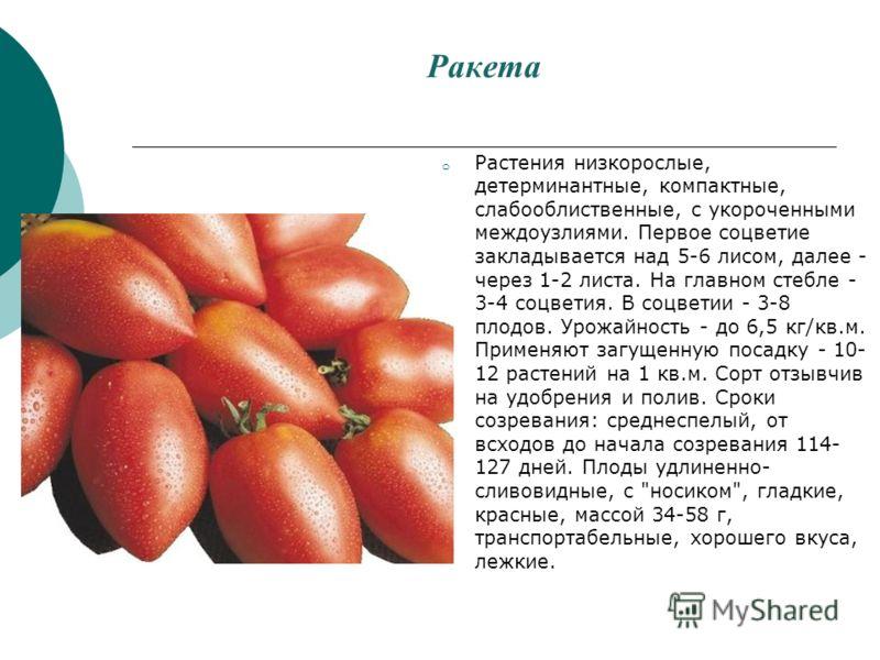 Ракета o Растения низкорослые, детерминантные, компактные, слабооблиственные, с укороченными междоузлиями. Первое соцветие закладывается над 5-6 лисом, далее - через 1-2 листа. На главном стебле - 3-4 соцветия. В соцветии - 3-8 плодов. Урожайность -