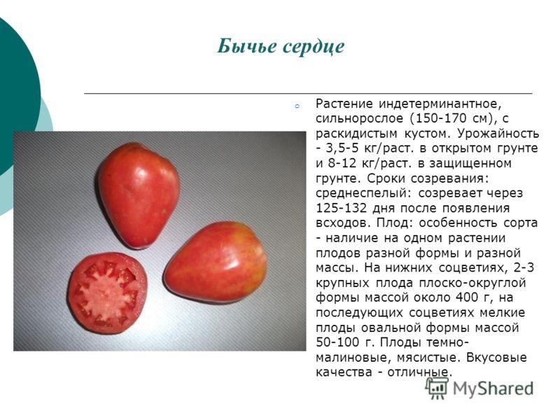 Бычье сердце o Растение индетерминантное, сильнорослое (150-170 см), с раскидистым кустом. Урожайность - 3,5-5 кг/раст. в открытом грунте и 8-12 кг/раст. в защищенном грунте. Сроки созревания: среднеспелый: созревает через 125-132 дня после появления