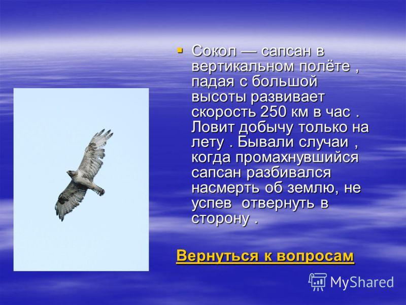 Сокол сапсан в вертикальном полёте, падая с большой высоты развивает скорость 250 км в час. Ловит добычу только на лету. Бывали случаи, когда промахнувшийся сапсан разбивался насмерть об землю, не успев отвернуть в сторону. Сокол сапсан в вертикально