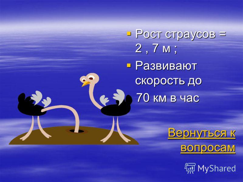 Рост страусов = 2, 7 м ; Рост страусов = 2, 7 м ; Развивают скорость до Развивают скорость до 70 км в час 70 км в час Вернуться к вопросам Вернуться к вопросам