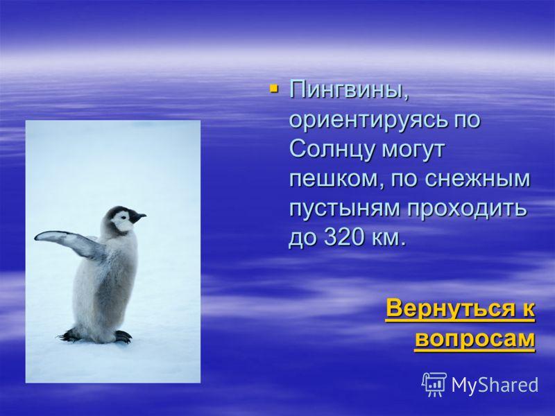 Пингвины, ориентируясь по Солнцу могут пешком, по снежным пустыням проходить до 320 км. Пингвины, ориентируясь по Солнцу могут пешком, по снежным пустыням проходить до 320 км. Вернуться к вопросам Вернуться к вопросам
