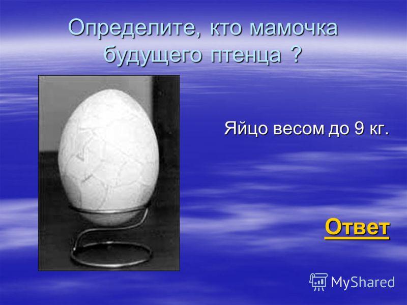 Определите, кто мамочка будущего птенца ? Яйцо весом до 9 кг. Ответ Ответ Ответ
