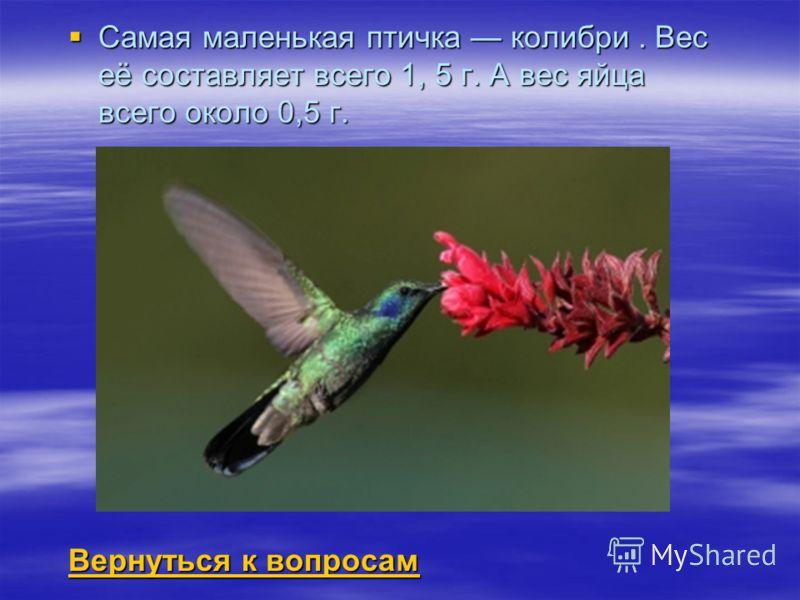 Самая маленькая птичка колибри. Вес её составляет всего 1, 5 г. А вес яйца всего около 0,5 г. Самая маленькая птичка колибри. Вес её составляет всего 1, 5 г. А вес яйца всего около 0,5 г. Вернуться к вопросам Вернуться к вопросам