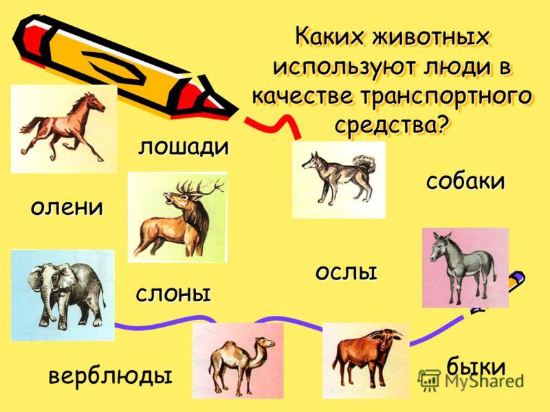 Каких животных используют люди в качестве транспортного средства? лошади ослы собаки олени слоны быки верблюды