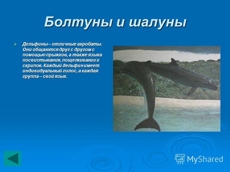 Болтуны и шалуны Дельфины – отличные акробаты. Они общаются друг с другом с помощью прыжков, а также языка посвистывания, пощелкивании и скрипов. Каждый дельфин имеет индивидуальный голос, а каждая группа – свой язык. Дельфины – отличные акробаты. Он