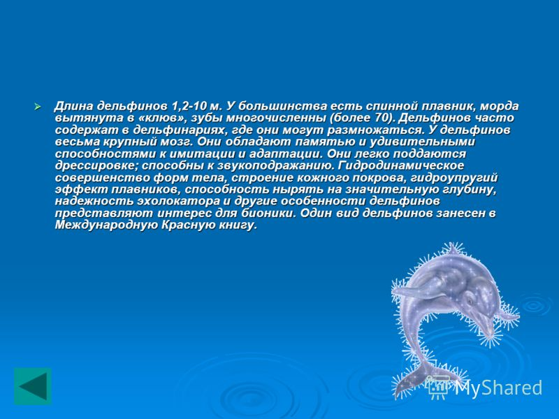 Длина дельфинов 1,2-10 м. У большинства есть спинной плавник, морда вытянута в «клюв», зубы многочисленны (более 70). Дельфинов часто содержат в дельфинариях, где они могут размножаться. У дельфинов весьма крупный мозг. Они обладают памятью и удивите