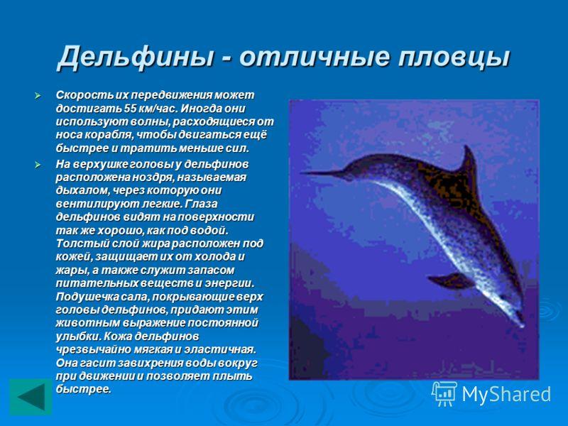 Дельфины - отличные пловцы Скорость их передвижения может достигать 55 км/час. Иногда они используют волны, расходящиеся от носа корабля, чтобы двигаться ещё быстрее и тратить меньше сил. Скорость их передвижения может достигать 55 км/час. Иногда они