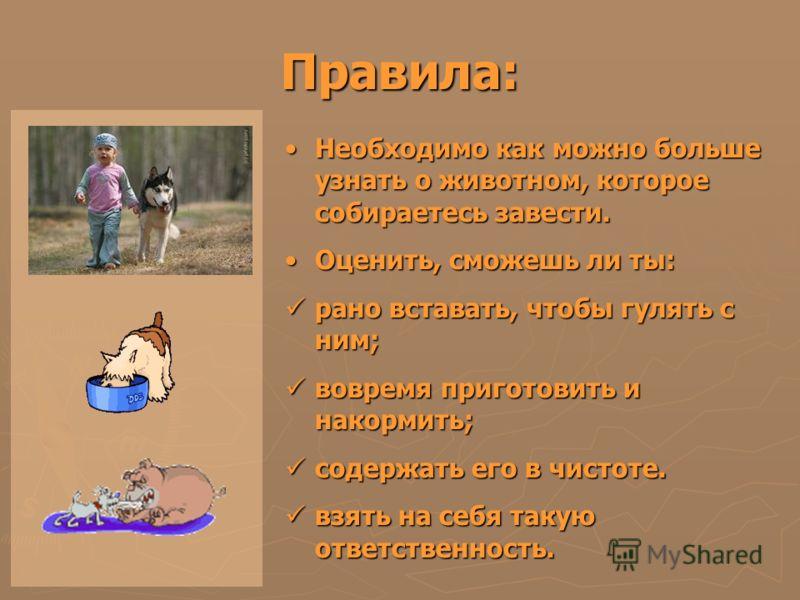 Правила: Необходимо как можно больше узнать о животном, которое собираетесь завести.Необходимо как можно больше узнать о животном, которое собираетесь завести. Оценить, сможешь ли ты:Оценить, сможешь ли ты: рано вставать, чтобы гулять с ним; рано вст