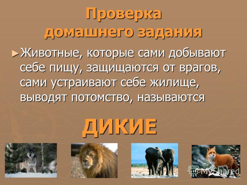Проверка домашнего задания Животные, которые сами добывают себе пищу, защищаются от врагов, сами устраивают себе жилище, выводят потомство, называются Животные, которые сами добывают себе пищу, защищаются от врагов, сами устраивают себе жилище, вывод