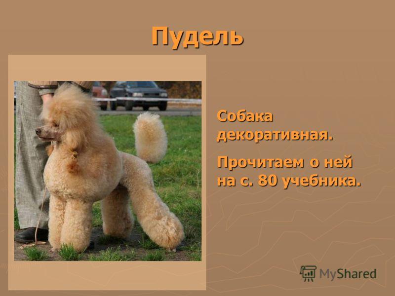 Пудель Собака декоративная. Прочитаем о ней на с. 80 учебника.