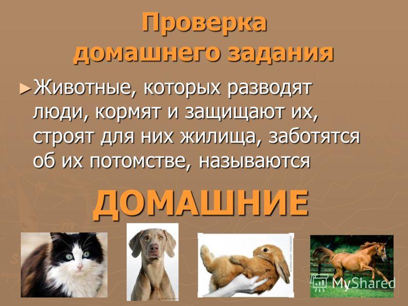 Проверка домашнего задания Животные, которых разводят люди, кормят и защищают их, строят для них жилища, заботятся об их потомстве, называются Животные, которых разводят люди, кормят и защищают их, строят для них жилища, заботятся об их потомстве, на