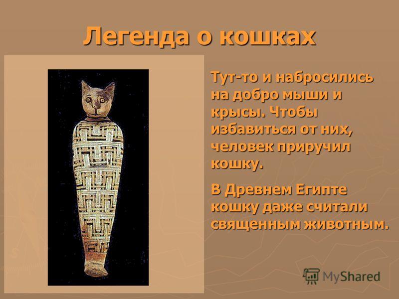 Легенда о кошках Тут-то и набросились на добро мыши и крысы. Чтобы избавиться от них, человек приручил кошку. В Древнем Египте кошку даже считали священным животным.