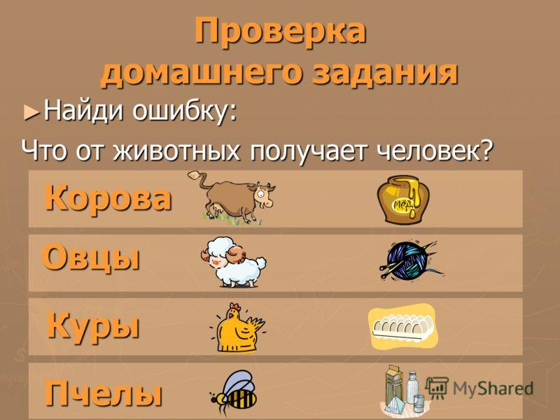 Проверка домашнего задания Найди ошибку: Найди ошибку: Что от животных получает человек? Корова Овцы Куры Пчелы