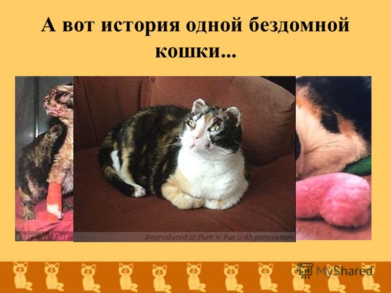 А вот история одной бездомной кошки...