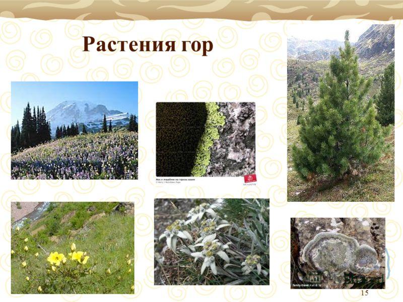 15 Растения гор
