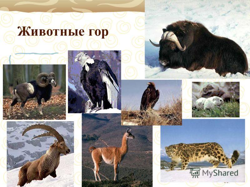16 Животные гор