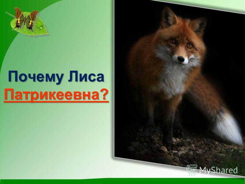 Почему Лиса Патрикеевна?