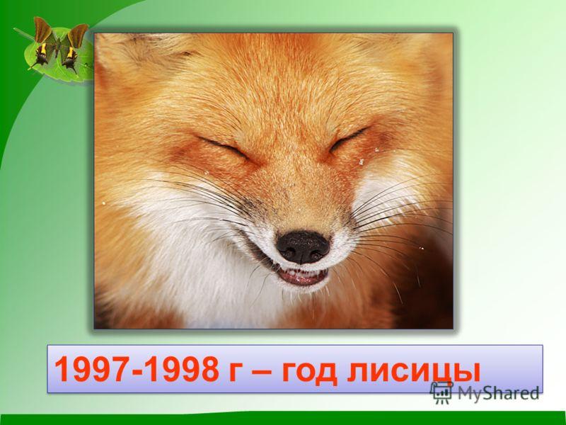 1997-1998 г – год лисицы