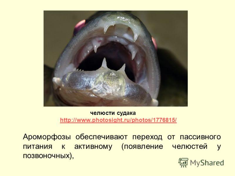 Ароморфозы обеспечивают переход от пассивного питания к активному (появление челюстей у позвоночных), челюсти судака http://www.photosight.ru/photos/1776815/