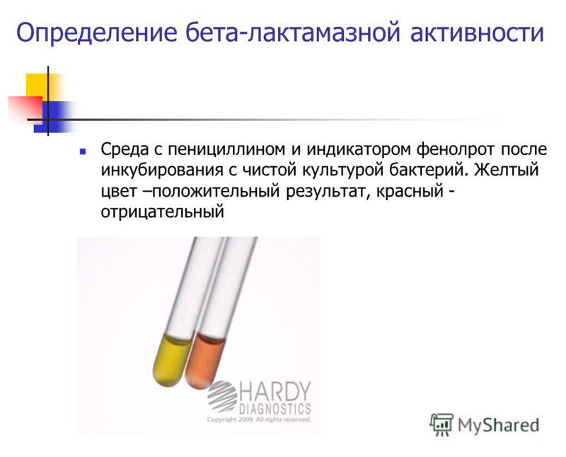 Определение бета-лактамазной активности Среда с пенициллином и индикатором фенолрот после инкубирования с чистой культурой бактерий. Желтый цвет –положительный результат, красный - отрицательный