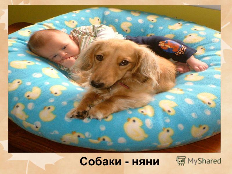 Собаки - няни