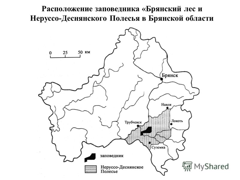 Расположение заповедника «Брянский лес и Неруссо-Деснянского Полесья в Брянской области