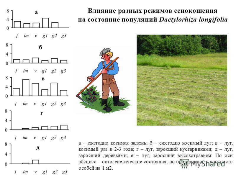 Влияние разных режимов сенокошения на состояние популяций Dactylorhiza longifolia а – ежегодно косимая залежь; б – ежегодно косимый луг; в – луг, косимый раз в 2-3 года; г – луг, заросший кустарниками; д – луг, заросший деревьями; е – луг, заросший в