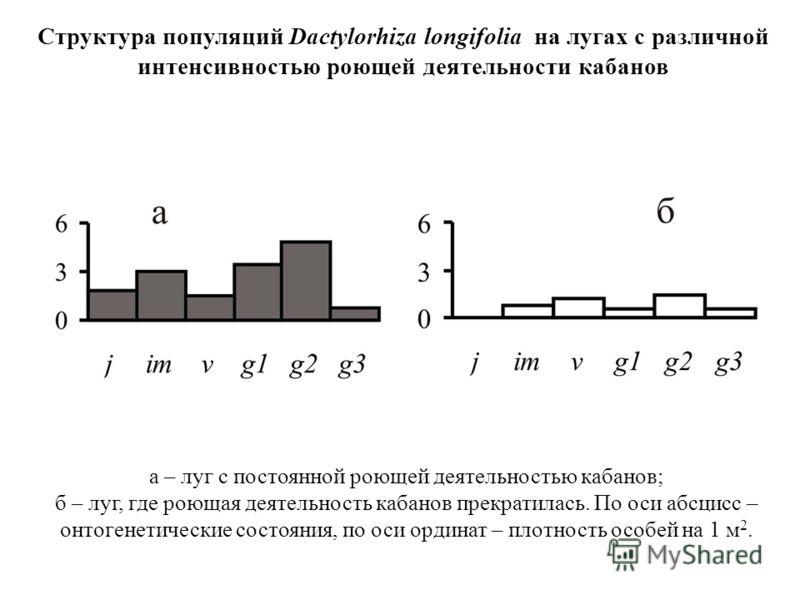 а – луг с постоянной роющей деятельностью кабанов; б – луг, где роющая деятельность кабанов прекратилась. По оси абсцисс – онтогенетические состояния, по оси ординат – плотность особей на 1 м 2. Структура популяций Dactylorhiza longifolia на лугах с