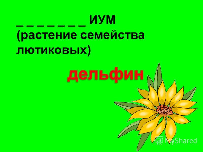 _ _ _ _ _ _ _ ИУМ (растение семейства лютиковых)