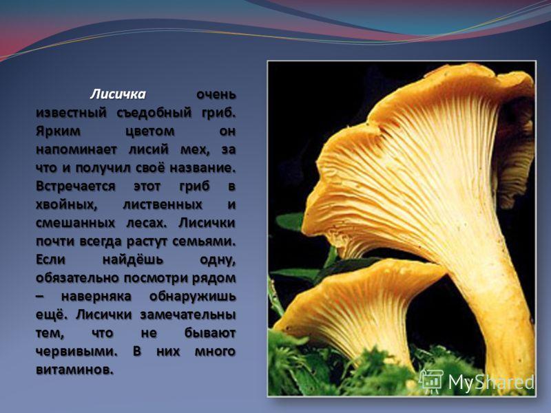 Лисичка очень известный съедобный гриб. Ярким цветом он напоминает лисий мех, за что и получил своё название. Встречается этот гриб в хвойных, лиственных и смешанных лесах. Лисички почти всегда растут семьями. Если найдёшь одну, обязательно посмотри