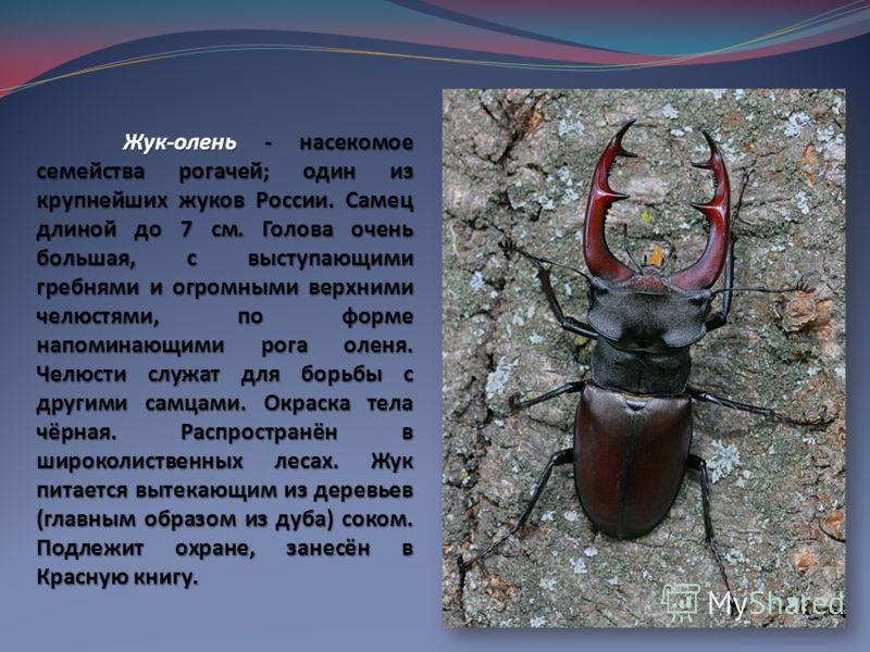 Жук-олень - насекомое семейства рогачей; один из крупнейших жуков России. Самец длиной до 7 см. Голова очень большая, с выступающими гребнями и огромными верхними челюстями, по форме напоминающими рога оленя. Челюсти служат для борьбы с другими самца