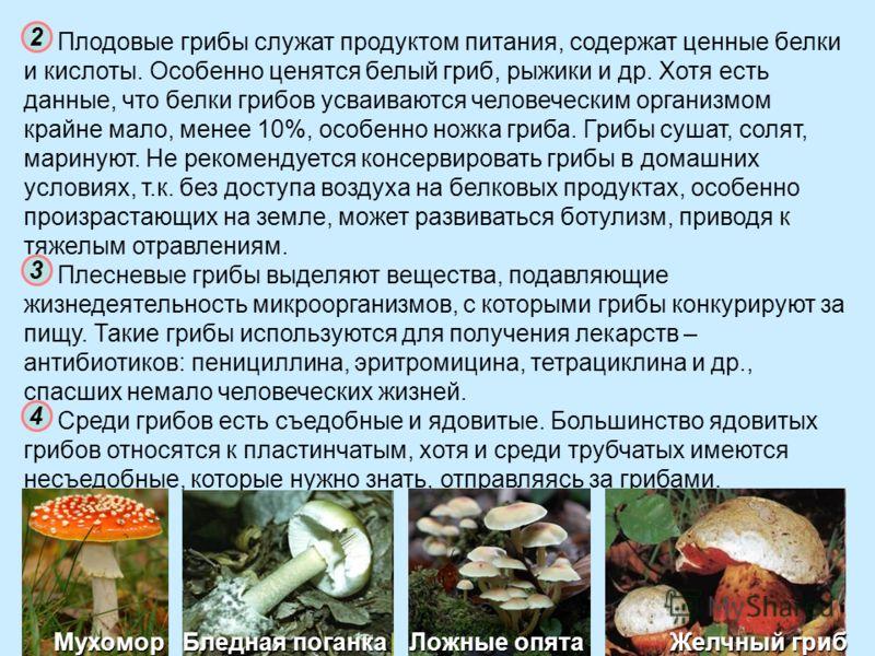 Плодовые грибы служат продуктом питания, содержат ценные белки и кислоты. Особенно ценятся белый гриб, рыжики и др. Хотя есть данные, что белки грибов усваиваются человеческим организмом крайне мало, менее 10%, особенно ножка гриба. Грибы сушат, соля