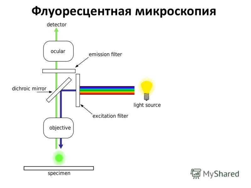 Флуоресцентная микроскопия
